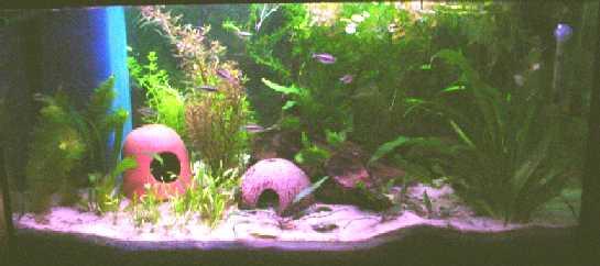 aquarienforum einzelnen beitrag anzeigen pflanzen im. Black Bedroom Furniture Sets. Home Design Ideas
